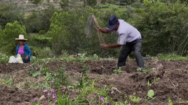 vídeos y material grabado en eventos de stock de many farmers in chota, northern peru, say they feel forgotten by the government and hope the new elected president will offer greater support for... - américa del sur