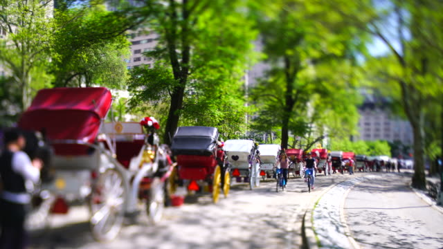 many horse carriages park in the row along the fresh green leaf trees-lined park road in central park at new york city ny usa on may 06 2019. - recreational horseback riding stock videos & royalty-free footage