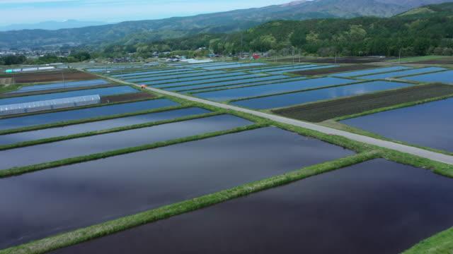 many japanese rice fields - 畑点の映像素材/bロール