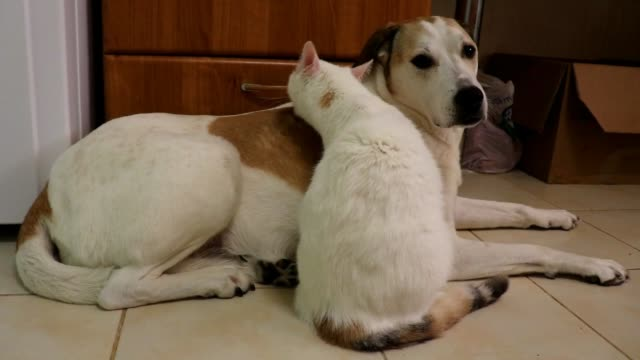 many people think cats and dogs can not live together in peace. they are two different animals with different personalities that will not always... - human tongue stock videos & royalty-free footage