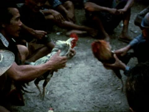 1980 many people watching a cockfight in indonesia / indonesia - 1980 stock videos and b-roll footage