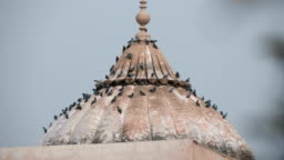 Many pigeons are sitting on the dome of the temple on the territory Red Fort