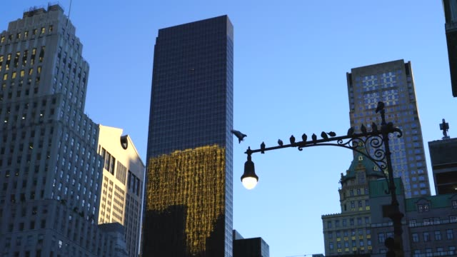 vídeos de stock e filmes b-roll de many pigeons stay on the streetlight at dusk, which stand among the midtown manhattan skyscrapers at new york ny usa on oct. 30 2018. - semáforo de trânsito
