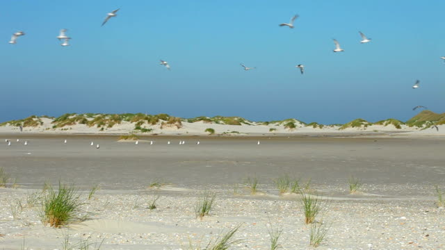 many seagulls - north sea stock videos & royalty-free footage