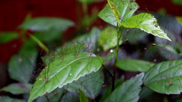 vidéos et rushes de araignée sur de nombreux - groupe d'objets