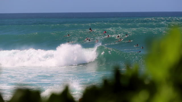 stockvideo's en b-roll-footage met many surfers on a blue ocean with sets of waves forming in pipeline, hawaii - oahu