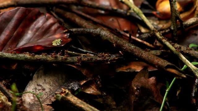 many termites - invertebrate stock videos & royalty-free footage