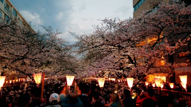 vidéos et rushes de beaucoup de touristes cherry blossom visualisation à la rivière meguro. tokyo, japon - lanterne