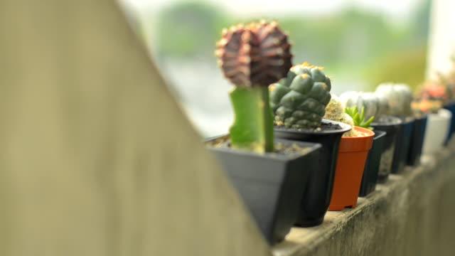 vídeos de stock, filmes e b-roll de muitos tipos de cactus está na beirada - armação de janela