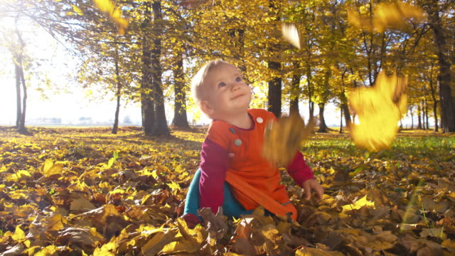 slo mo maple leaves falling over baby girl - baby girls stock videos & royalty-free footage