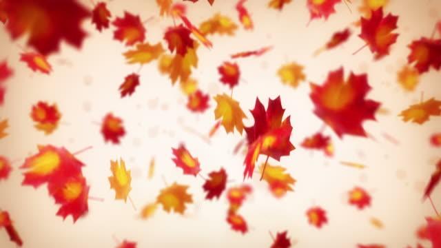 Maple leaves falls down. Loop.