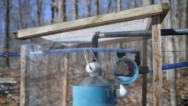 stockvideo's en b-roll-footage met maple syrup production and bottling in southern ontario at the wagler maple products farm in wellesley ontario canada on friday march 2 2018 - hars