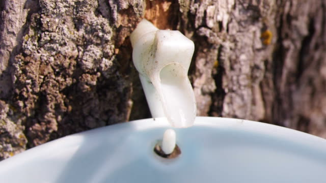 maple syrup - maple syrup stock videos & royalty-free footage