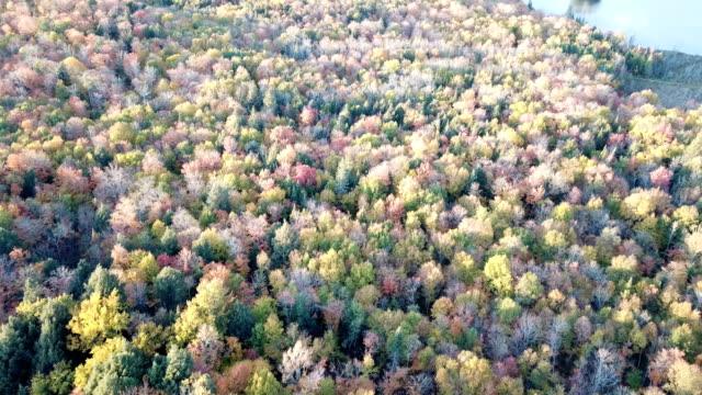 vidéos et rushes de l'érable laisse changer de couleur en ontario, canada, fond de saison d'automne - montréal