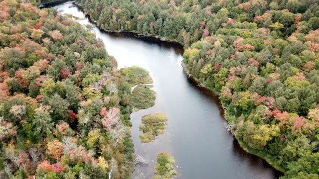 vidéos et rushes de maple tree leaves changing color in quebec, canada, autumn season background - montréal