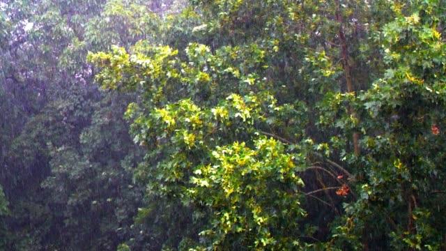 Ahornbäume in ein schweres Gewitter
