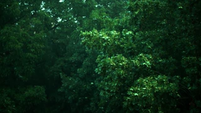 Ahornbäume im Gewitter