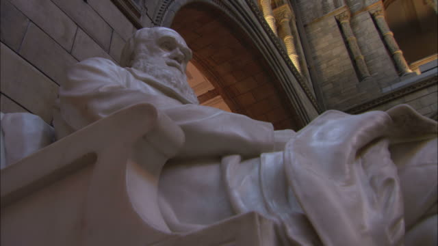 a marble statue of charles darwin is seen inside  natural history museum in london. - marble stock videos & royalty-free footage