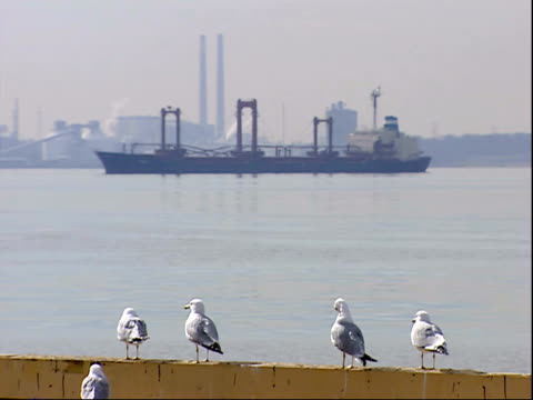 march 7, 2006 montage ships in harbor of baltimore port with seabirds on the shore / maryland, united states - medium group of animals stock videos & royalty-free footage