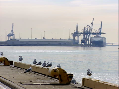 march 7, 2006 ship in harbor of baltimore port with seabirds on the shore / maryland, united states - medium group of animals stock videos & royalty-free footage