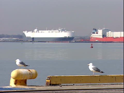 vidéos et rushes de march 7, 2006 ships in baltimore port with seabirds on the shore / maryland, united states - groupe moyen d'animaux