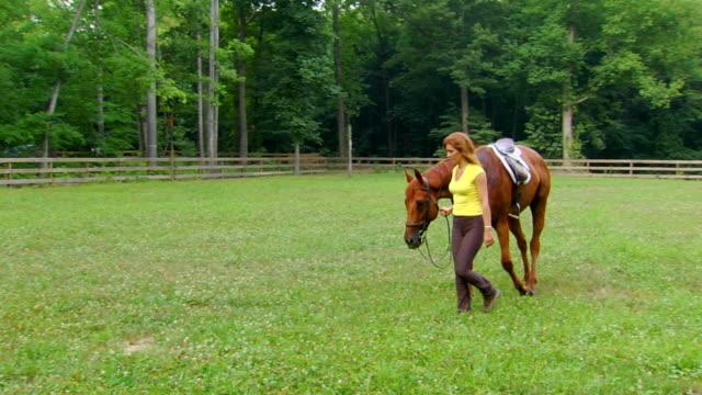 マーシャの馬-リード - 働く動物点の映像素材/bロール