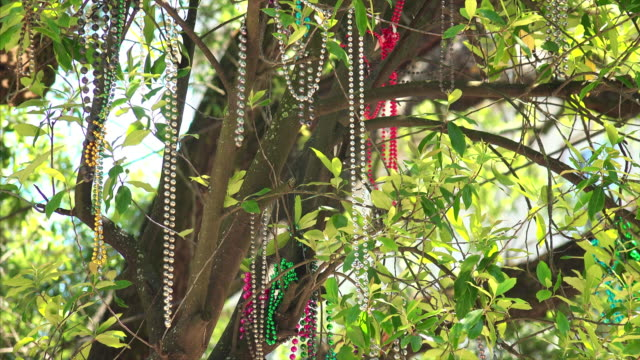 Mardi Gras beads hanging from tree branches in New Orleans, Louisiana