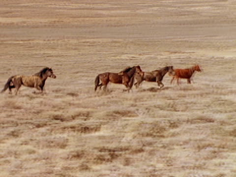 Mare leading horses single file escaping stallion in rear
