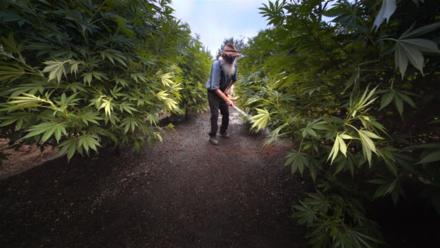 Marijuana grower working a pot farm, Oregon