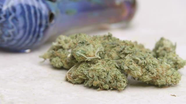 marijuana preperation - knopp växters utvecklingsstadium bildbanksvideor och videomaterial från bakom kulisserna