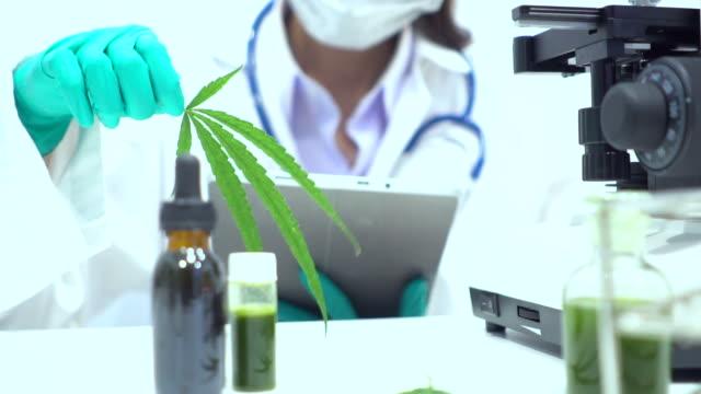 ricerca sulla marijuana in laboratorio da scienziato o medico - canapa video stock e b–roll