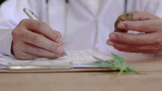 marijuana research - marijuana herbal cannabis stock videos & royalty-free footage