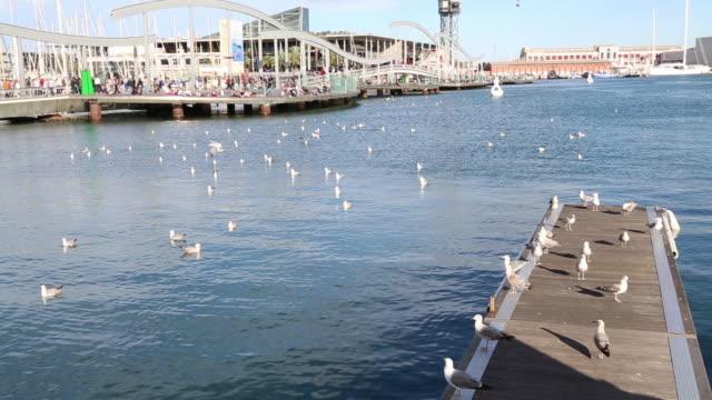 vídeos de stock e filmes b-roll de marina port vell, view of the harbor, barcelona, spain. - porto de barcelona