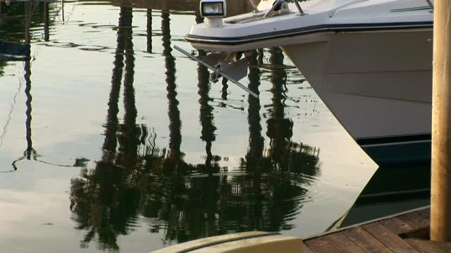 marina - fan palm tree stock videos & royalty-free footage