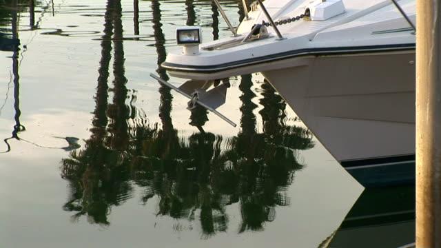 vidéos et rushes de marina - palmier à feuilles en forme d'éventail