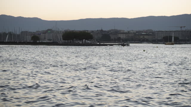 vidéos et rushes de marina water vista at dusk / geneva, switzerland - petit groupe d'animaux
