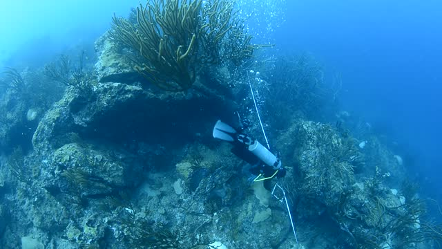 marine biologist studying coral bleaching. - climate stock videos & royalty-free footage