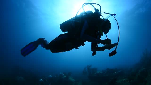 marine biologist. - underwater camera stock videos & royalty-free footage