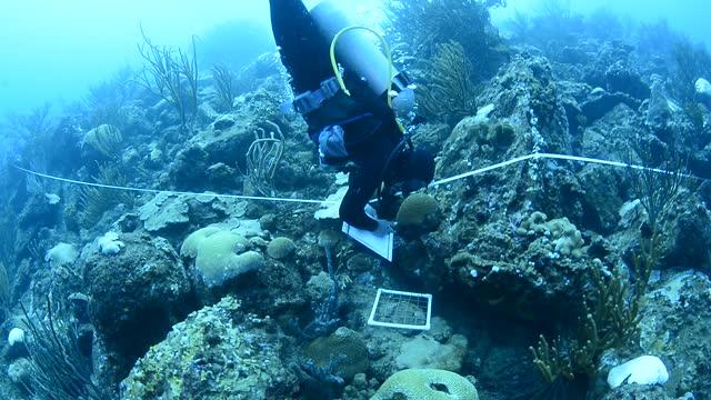 marine biologists. - underwater camera stock videos & royalty-free footage
