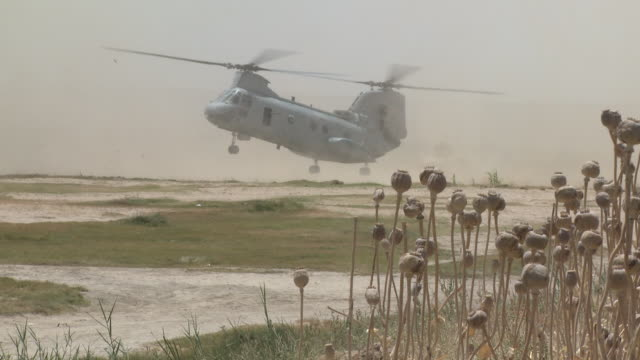 stockvideo's en b-roll-footage met a u.s. marine ch-46 lands near a poppy field. - afghanistan