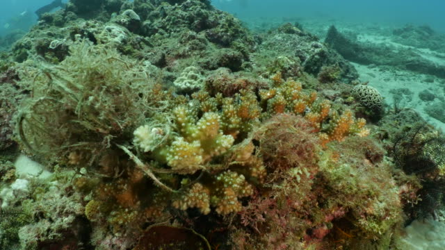 vídeos y material grabado en eventos de stock de escombros marinos en coral duro submarino en taiwán - océano pacífico