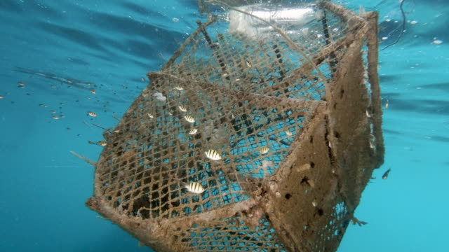 marine debris ghost net pollution from commercial fishing industry trawler lost at sea - fishing net stock videos & royalty-free footage