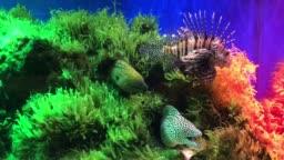 marine fish tank aquarium