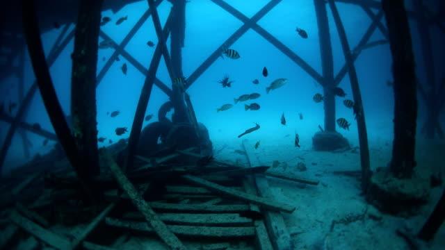 marine life at dive center in Mabul, Sipadan, Malaysia