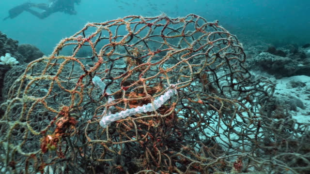 vídeos de stock e filmes b-roll de marine life trapped in discarded ghost net fishing gear underwater - emaranhado
