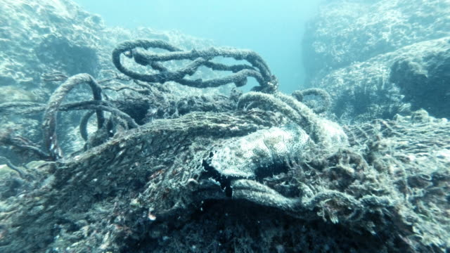 marine life trapped in underwater ghost net - trapped stock videos & royalty-free footage