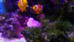 Marine Life With Tropical Fish Swimming In Aquarium