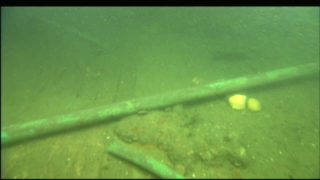 marine organisms cover the shipwreck of the steamer portland. - undersea stock-videos und b-roll-filmmaterial