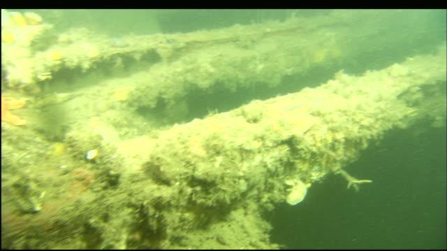 stockvideo's en b-roll-footage met marine organisms cover the shipwreck of the steamer portland. - scheepswrak
