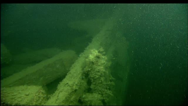 stockvideo's en b-roll-footage met marine organisms cover the sunken wreckage of the steamer portland. - scheepswrak